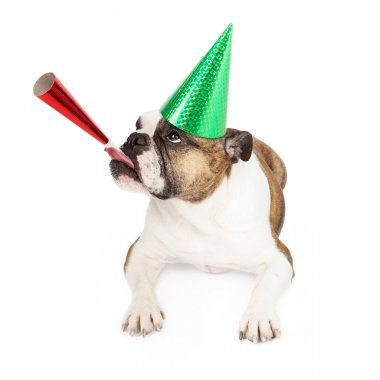Bulldog Wearing Party Hat Blowing Horn