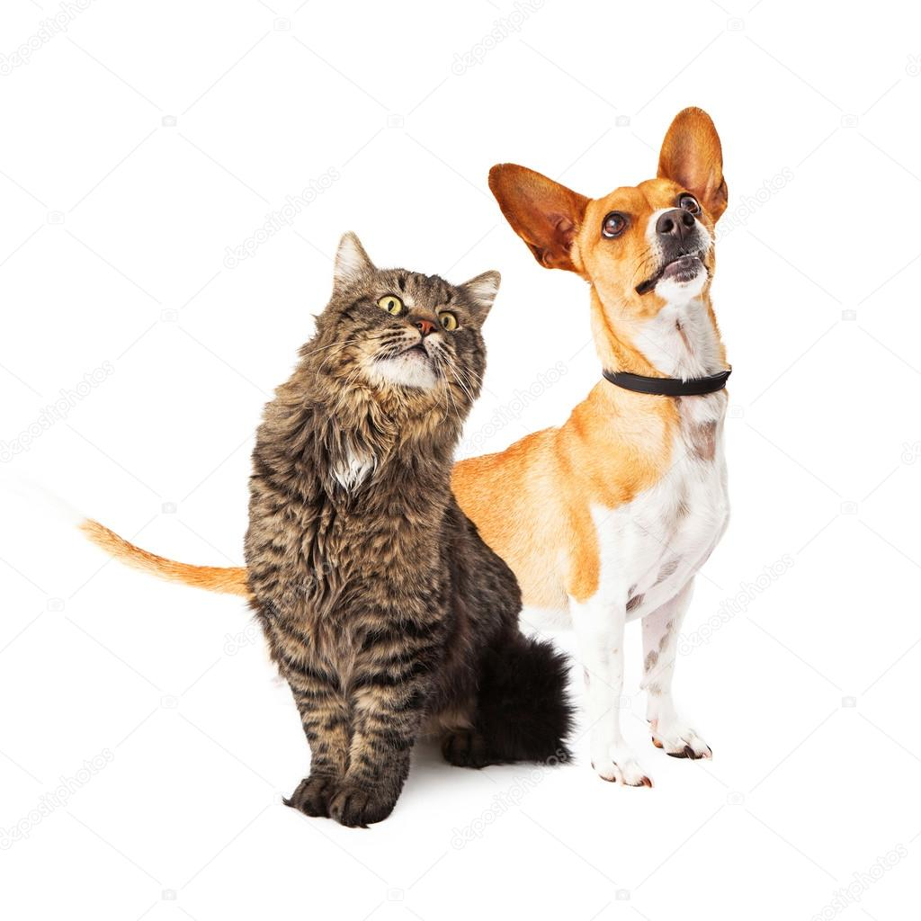 Funny Cats And Dogs Pictures Climbing Cat