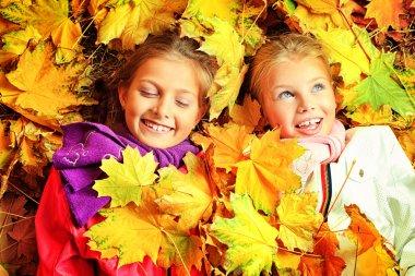 Maple leaf fall