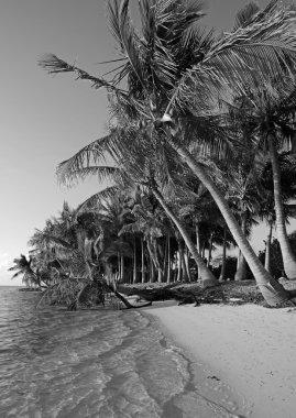 Black and white beach in tropical destination