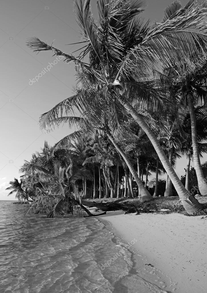 Black and white beach in tropical destination