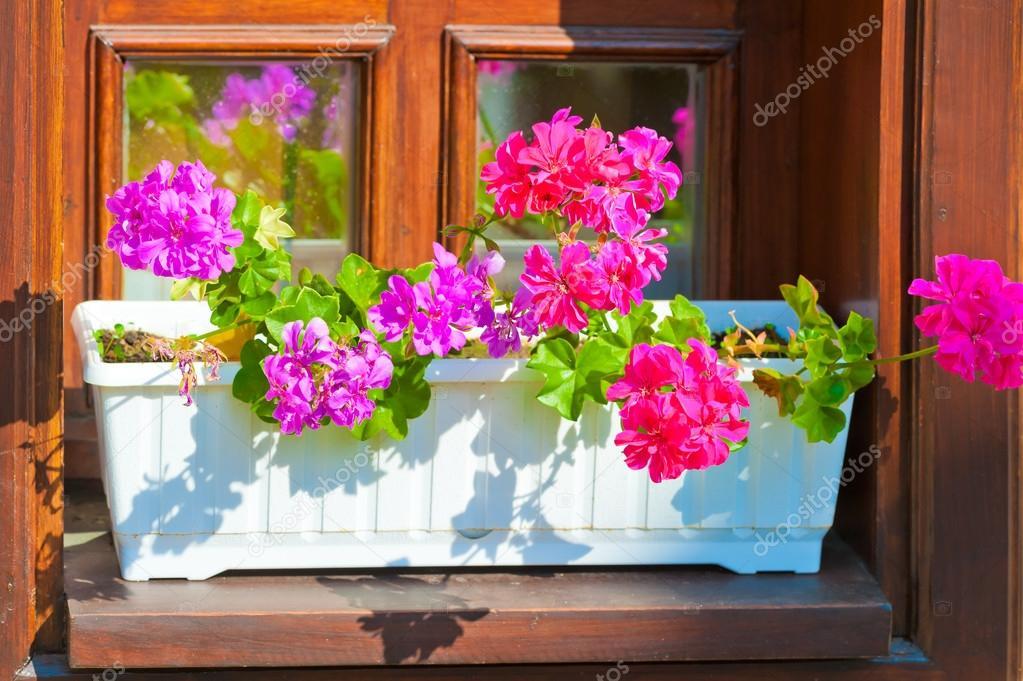 Fioriere con fiori rosa sul davanzale della finestra for Finestra con fiori disegno