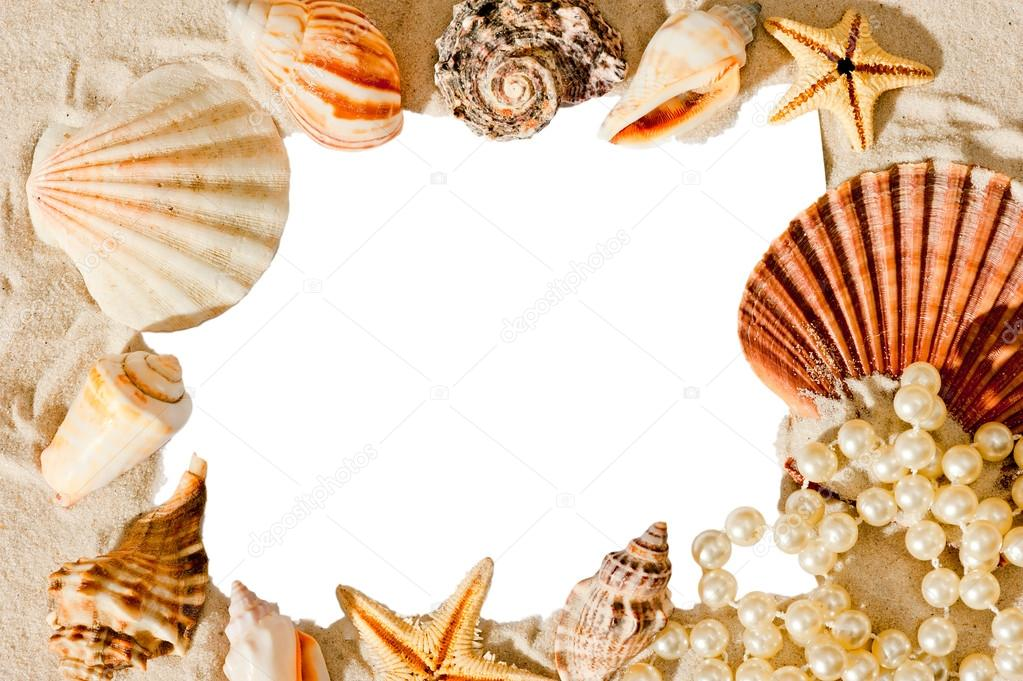 white blank space for inscriptions surrounded by shells