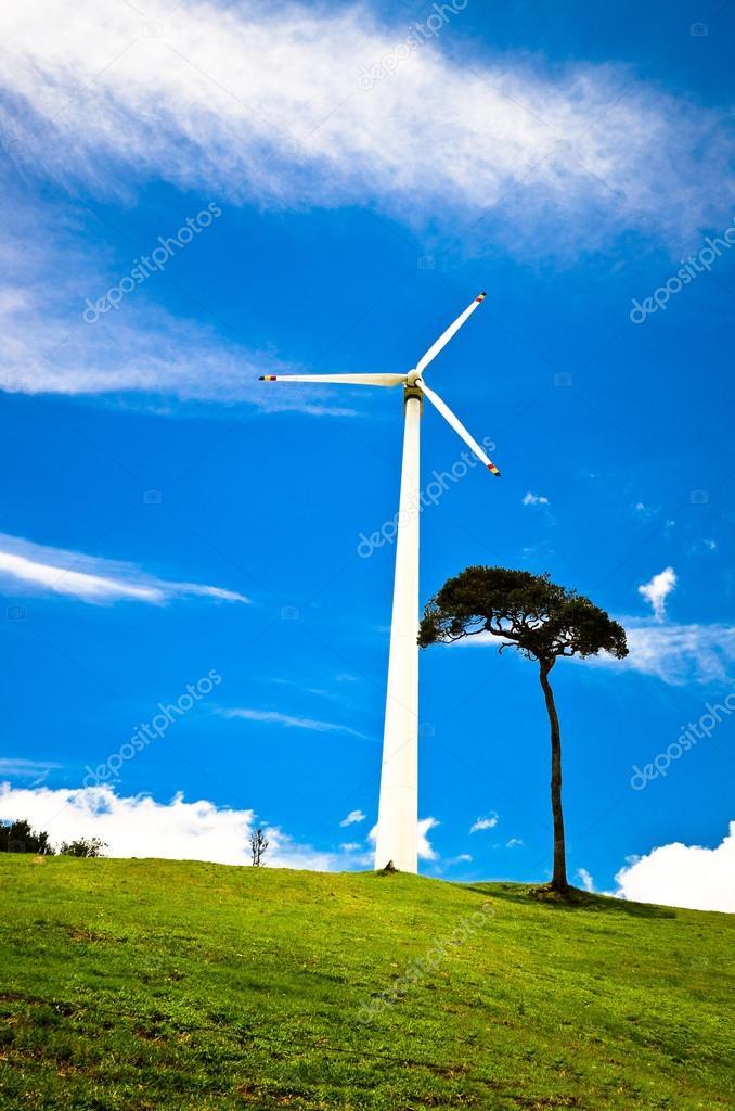 Wind Turbines in meadow