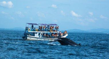 Big blue whales in deep ocean