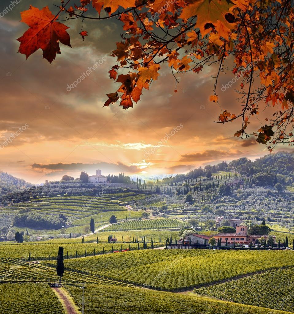 Фотообои Chianti vineyard landscape in Tuscany, Italy