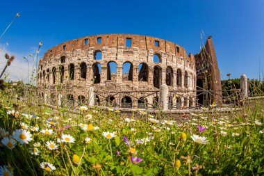 Colosseum during spring time, Rome, Italy
