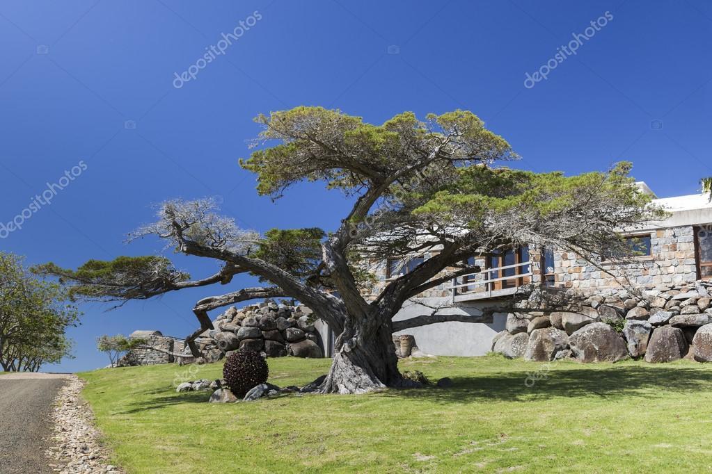 Huge trees and country house Bingie (near Morua) . NSW. Australi