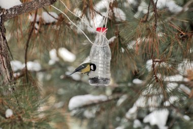 a bird eats the seeds of handmade bird feeders