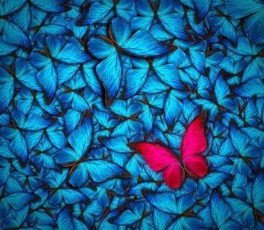 """Картина, постер, плакат, фотообои """"красивый фон бабочки """", артикул 51061241"""