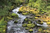 gljun stream, Alpi Giulie, slovenia