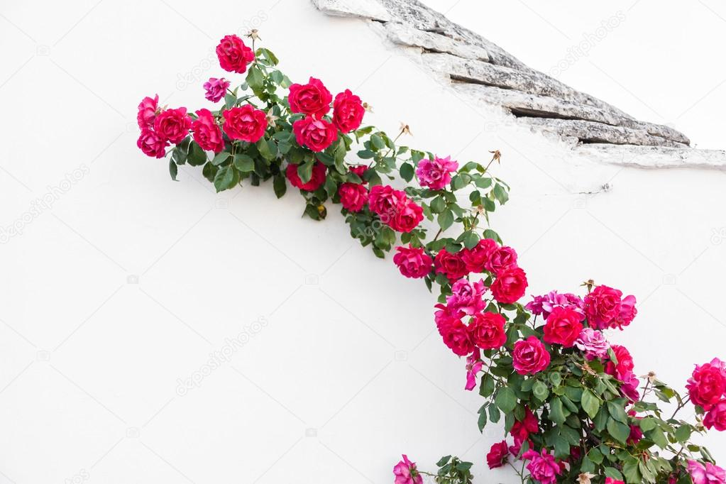 Crawling roses