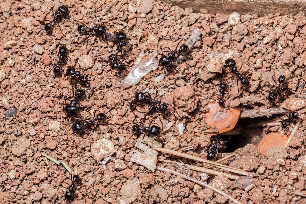 ant's teamwork