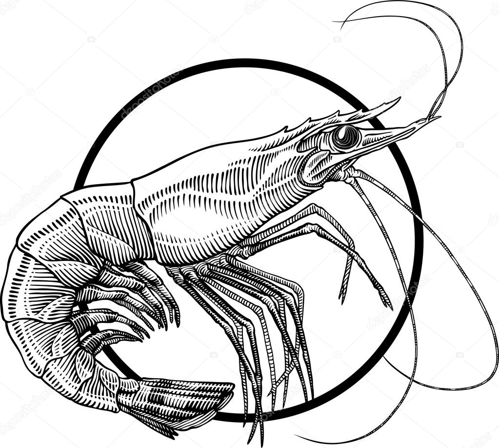 shrimp stock vectors royalty free shrimp illustrations depositphotos rh depositphotos com Pasta Salad Clip Art Grapes Clip Art