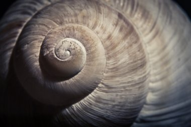 Dramatic close up of spiral shell, muted colors