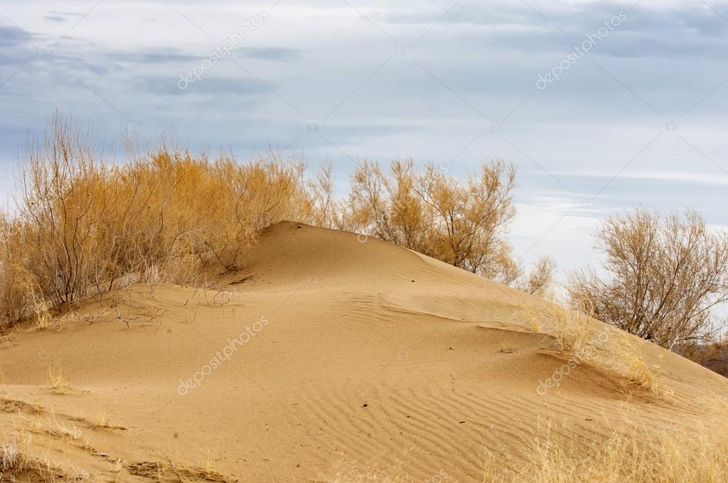 Autumn has come in the steppe