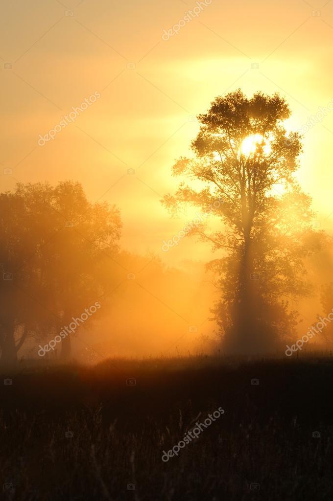 Фотообои Лес туман