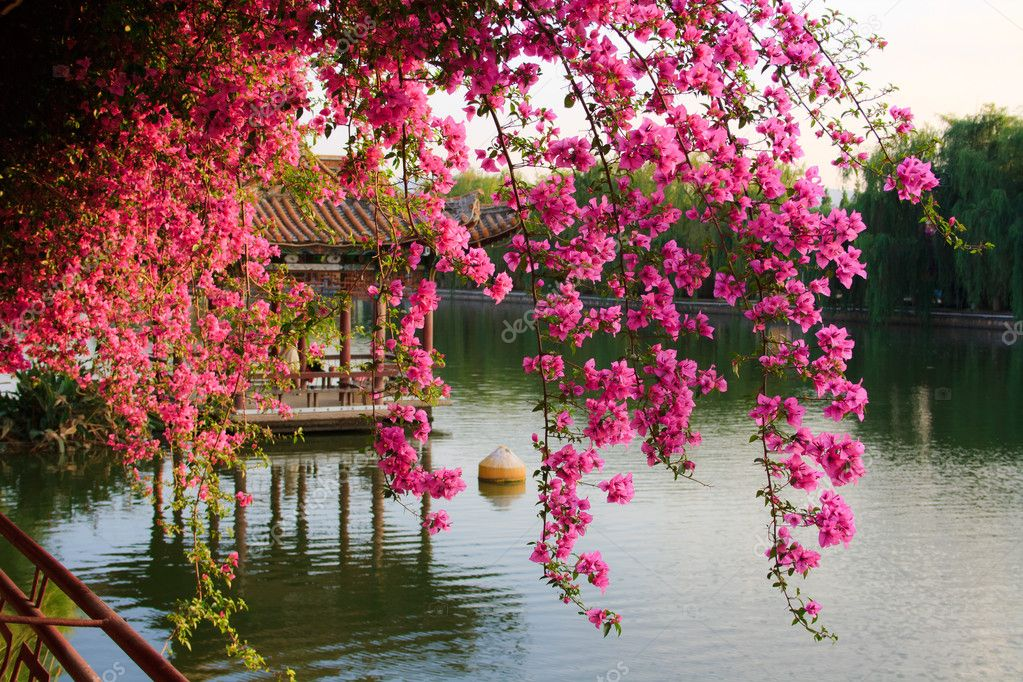 Chinese park. Kunming. China. stock vector