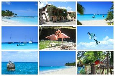 Tropical collage, Dominican Republic.