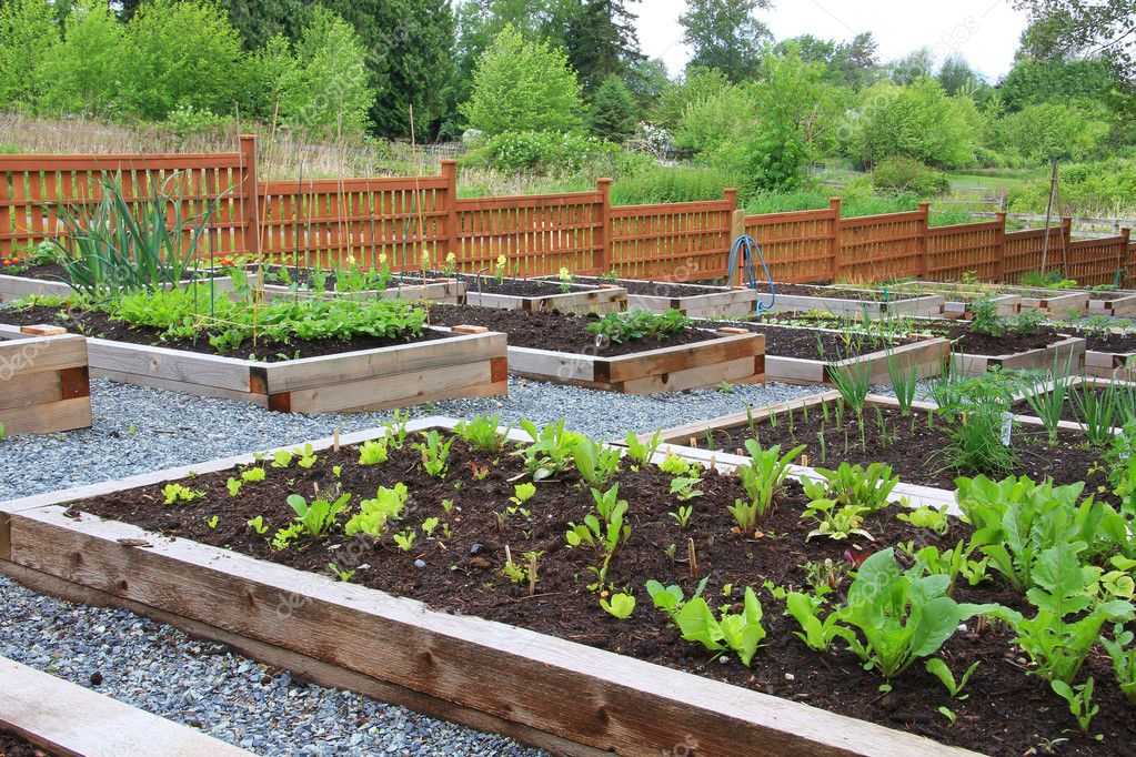 Community vegetable garden