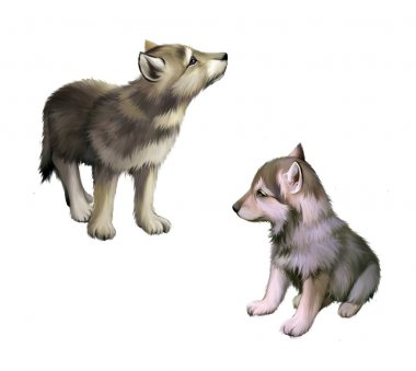 Two baby wolfs