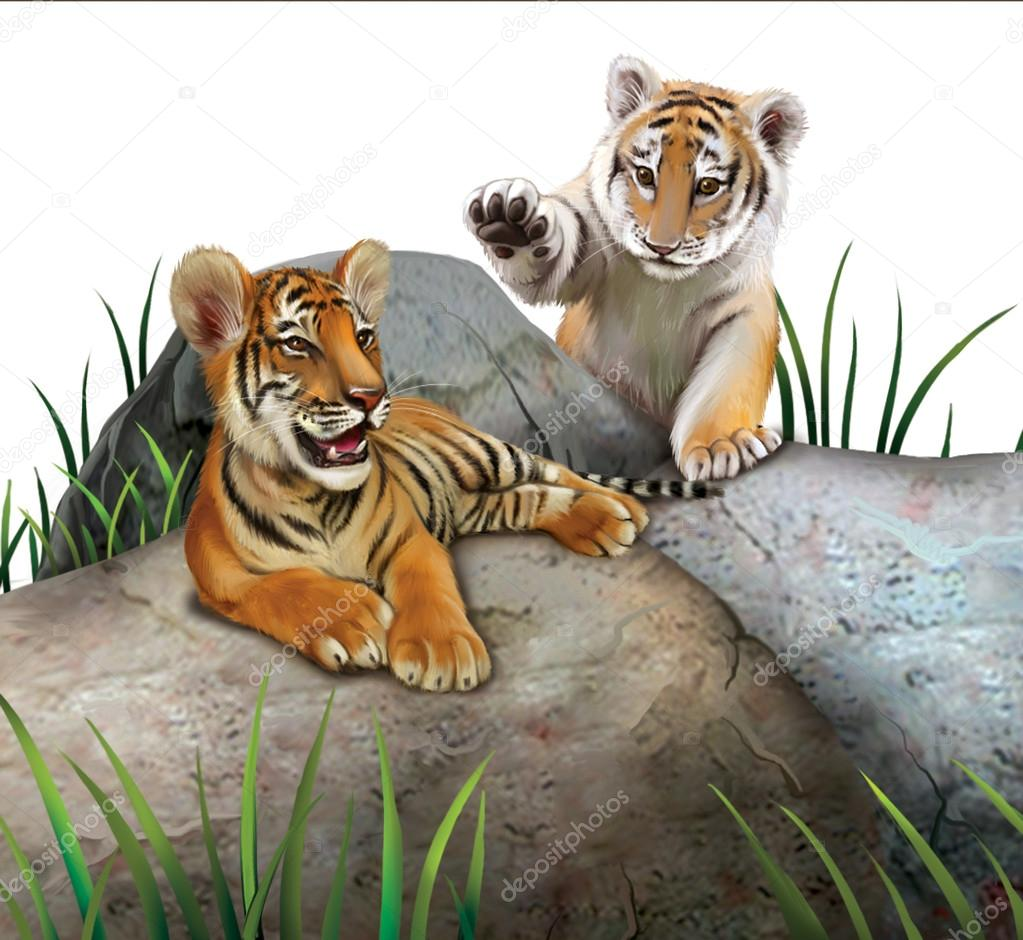Two baby tigers playing on the rocks