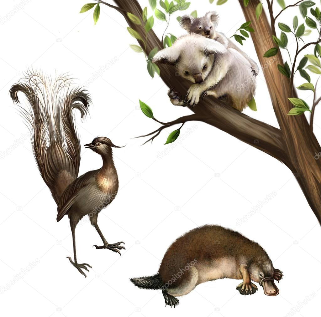 Australian animals: koala, platypus and lyrebird.
