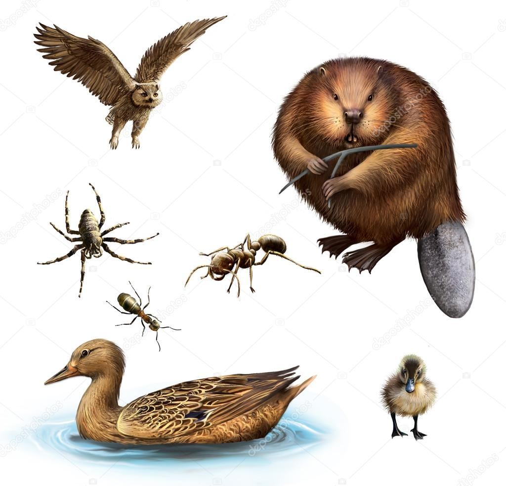 Owl, Beaver, Spider, Ants, Duck and duckling
