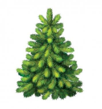 Pine tree. christmas tree