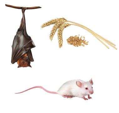 Bat hanging on a tree branch Malayan bat, Fruit bat, White cute mouse. Wheat ears