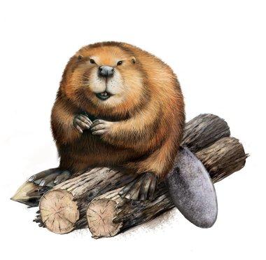 Adult Beaver sitting on logs.