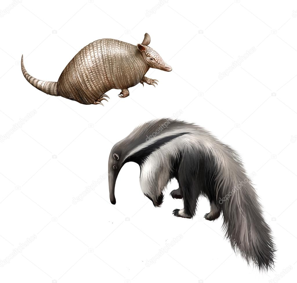 Armadillo and Giant anteater Isolated illustration on white background.