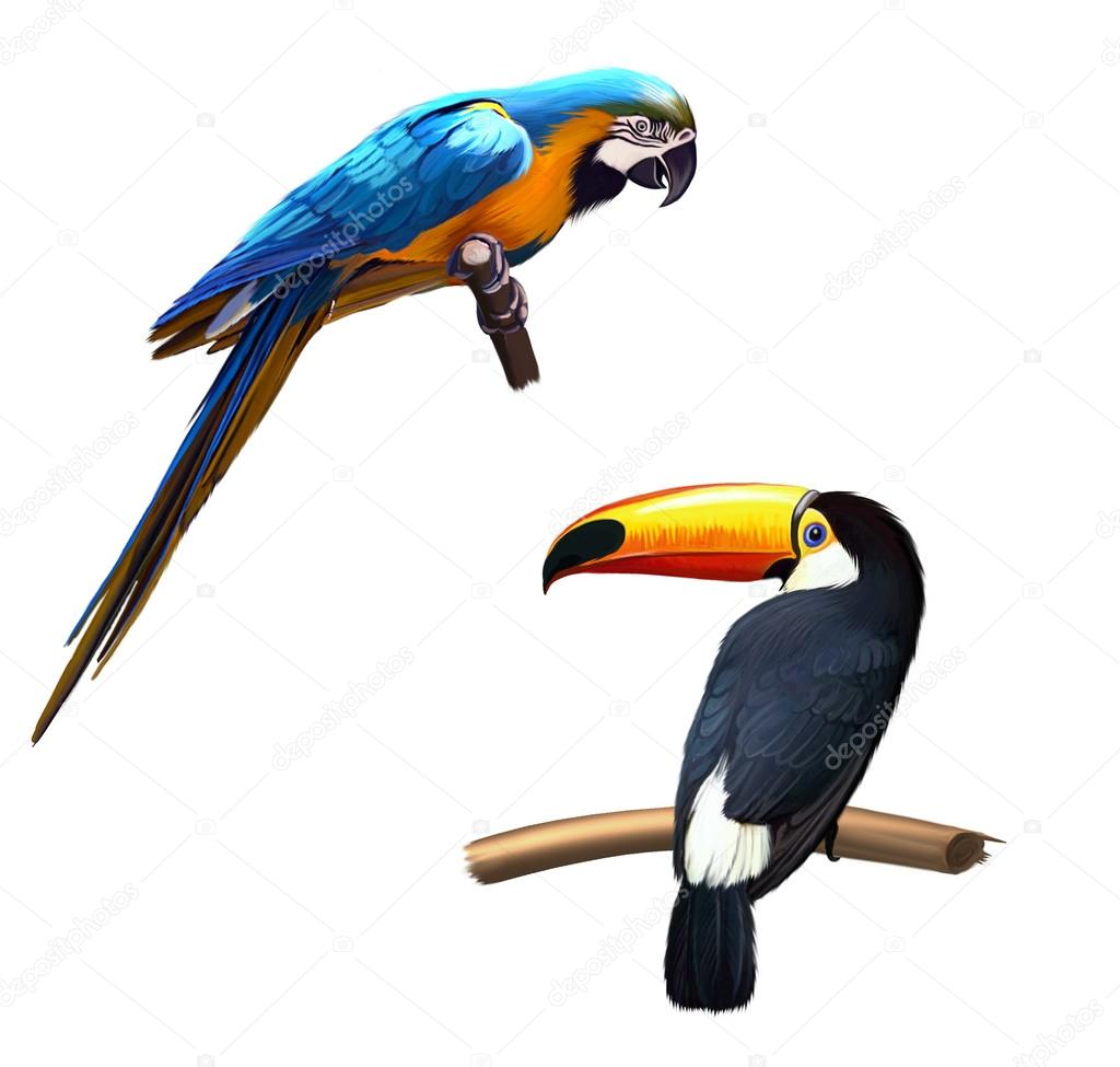 Colorful blue parrot macaw, toucan