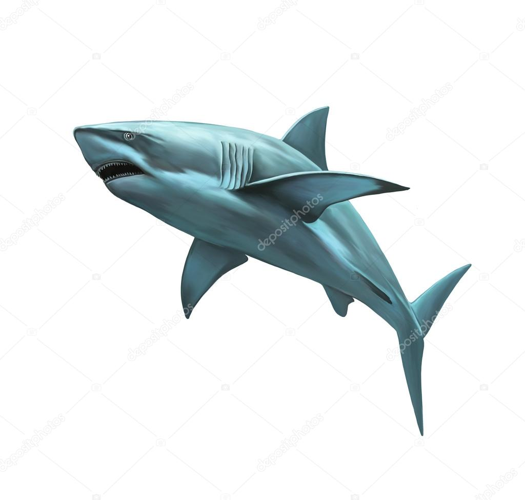 Large grey reef shark showing the mouth and teeth, Isolated illustration on white background.