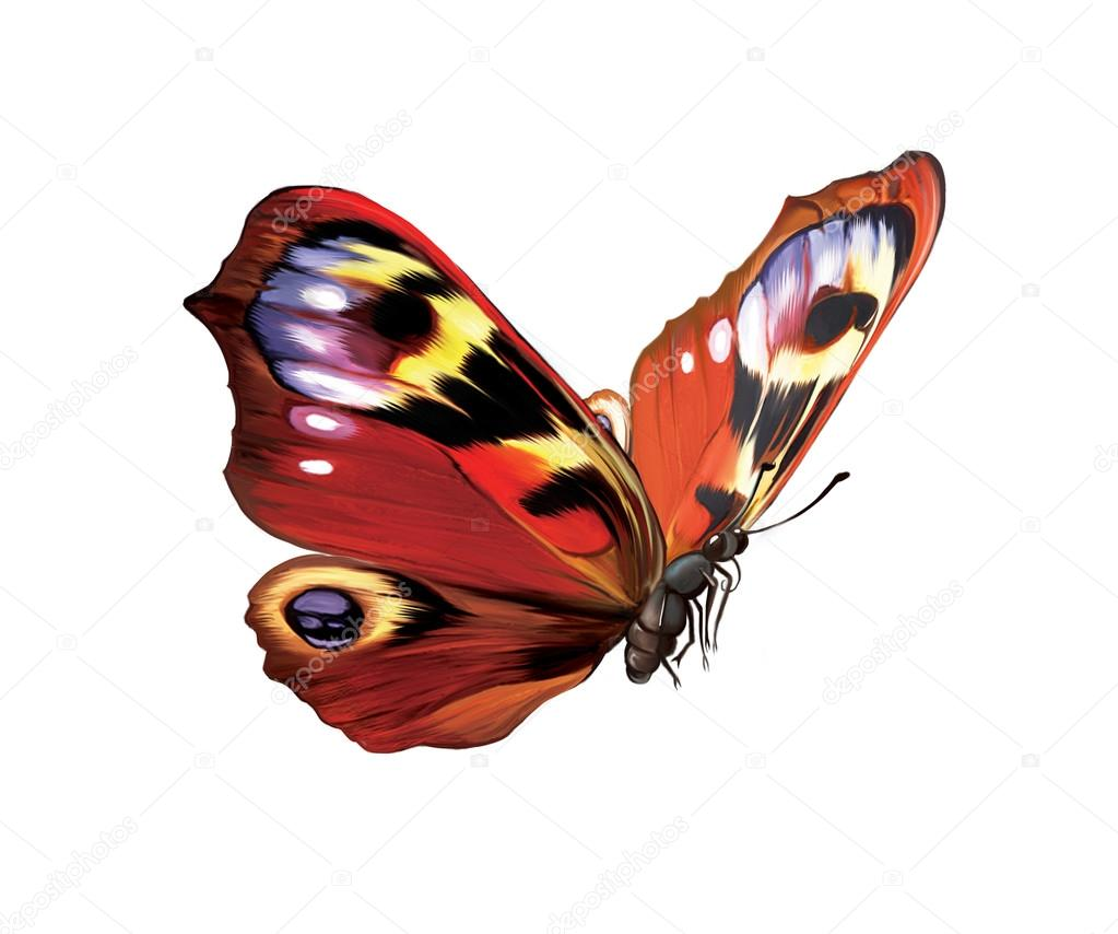 European Peacock, Bright Butterfly Isolated illustration on white background.