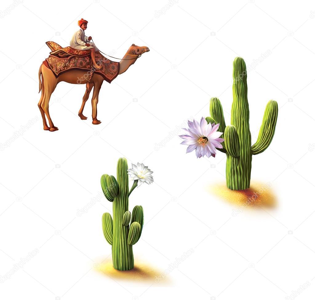 Desert, Bedouin on camel, saguaro cactus with flowers, Opuntia cactus, Natural habitat