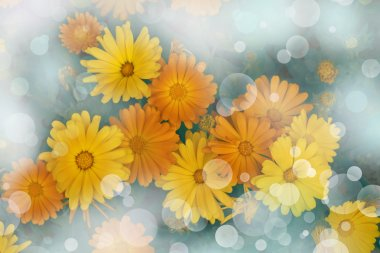 Yellow flowers calendula.