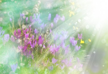 Purple flower background. Sunshine. Spring background