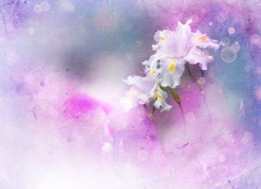 White iris flower