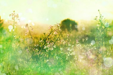 Flowers on meadow. Summer background