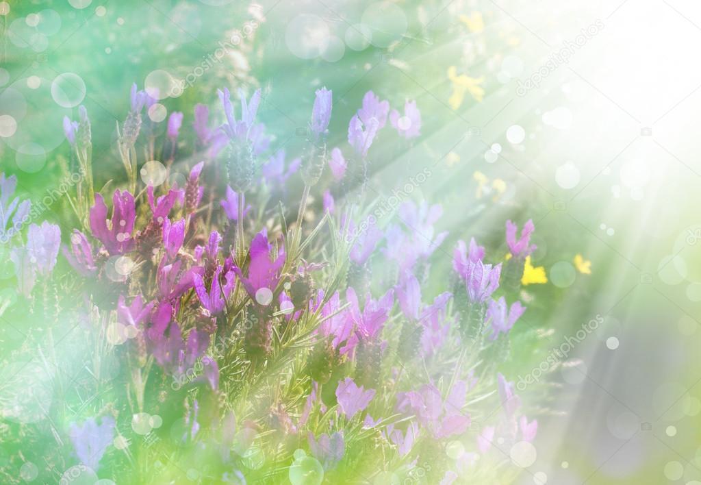 Поздравление с 8 марта  красивые открытки цветов и