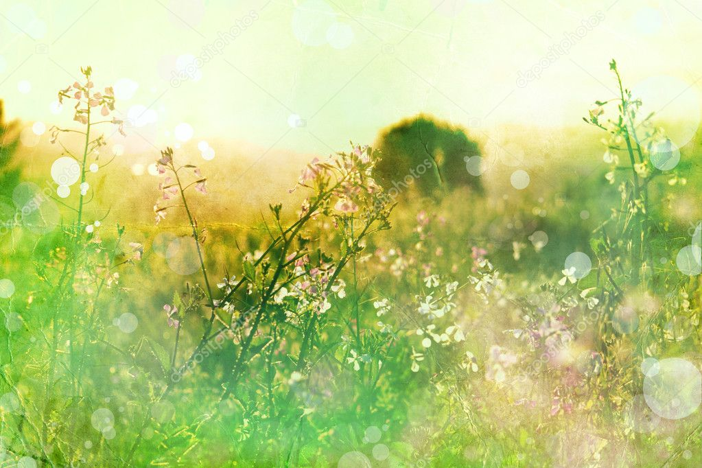 Фотообои Flowers on meadow. Summer background