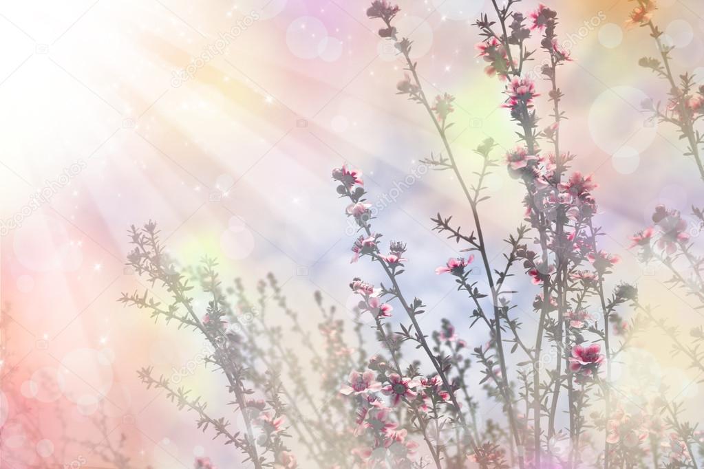 cerezo japonés - sakura. floración del árbol — Fotos de Stock ...