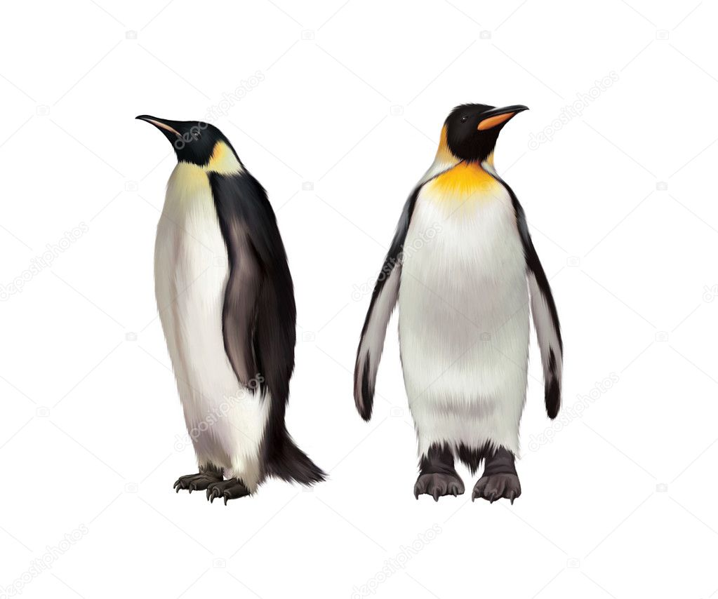 King Penguin, Gentoo and emperor penguin — Stock Photo ...
