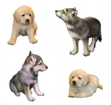 Cute little puppies of yellow labrador retriever and siberian husky. isolated illustration on white background