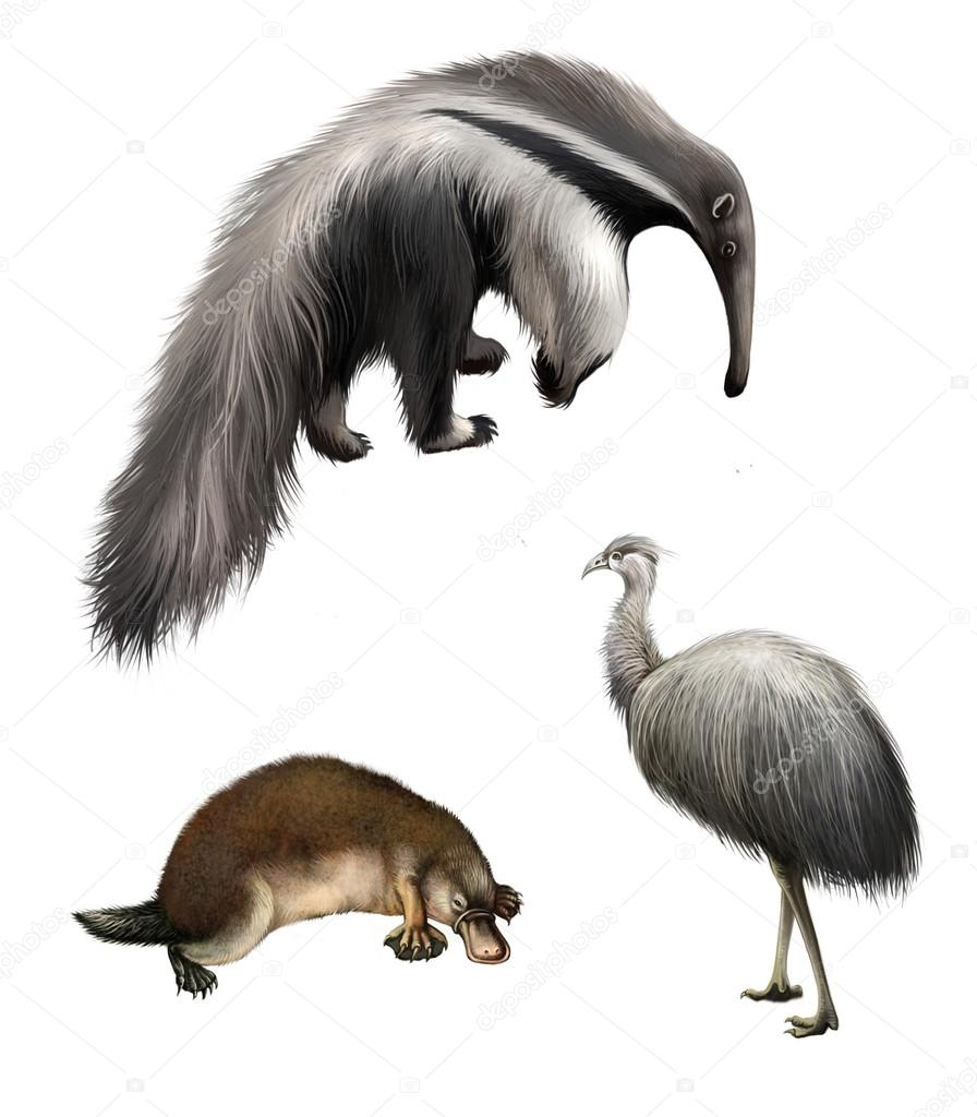 Giant anteater, Ostrich Emu and platypus, Isolated on white background.