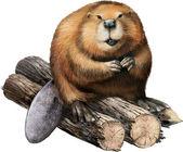 Photo Beaver