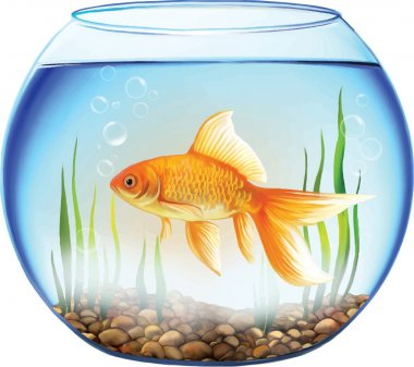 Gold fish in a Round aquarium with stones and plants.