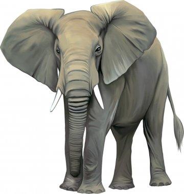 Big adult Asian elephant