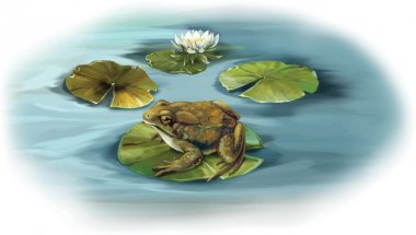 Frog sitting on a lily leaves in a puddle
